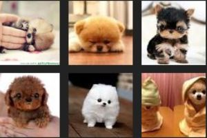 These animals are so tiny and fluffy they will make you go INSANE.