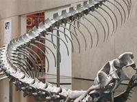 You gotta check out this awesome 175 ft (53m) Snake Skeleton