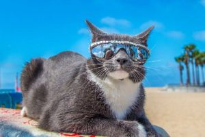 Is this the world's coolest cat? Adorable moggy who has to wear SUNGLASSES becomes viral sensation