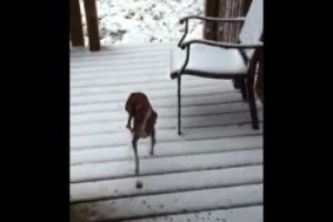 Just a normal dog but what he does next will make you laugh out loud.