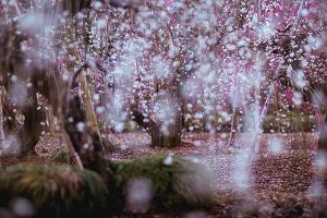 Photographer Captures Spring Colors Of Japan