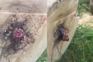 WTF of the day! Guy Cuts Down a Tree, Finds Something Terrifying Inside.