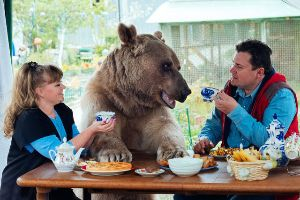Meanwhile in Russia: 300 pounds (136 Kg) Bear Lives In A Family As A Pet (11 pics)