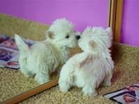 Super cute puppies and kittens VS. mirrors