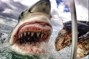 Woman captures amazing up-close photo of great white shark while cage diving in South Africa. Damn nature, you scary