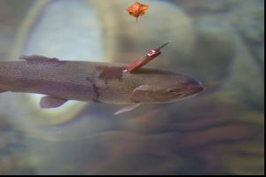 Badass Fish Doesn`t Care About The Swiss Army Knife Lodged In Its Head