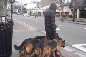 Seemed Like He`s Just Walking His Dogs. When I Looked Closer, I Was Dumbfounded.