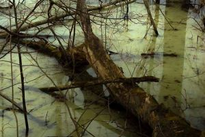 These Swamp Is scary, What they Found Inside It Is A Lot Scarier