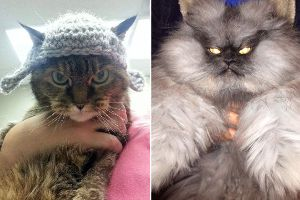 Cats Whose Death Stare Will Devour Your Soul
