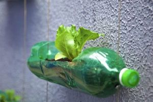 DIY: Creation of a modern garden with upcycling plastic bottles (5 pics)