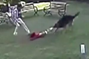 Baby Girl Attacked By German Shepherd, Brother, 10, Tries To Save Her, Dog Owner Sits Around On Her Fat Ass Being A Piece Of Sh*t!