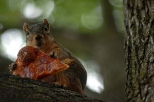 Squirrels Are Notorious Pizza Thieves!