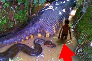 These Are The Deadliest Creatures Found In The Amazon. @1:30 I Gasped! OMG!