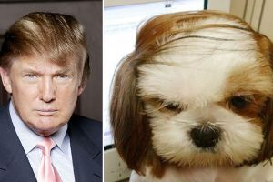 Who Wore It Better? (15 pics)