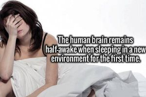 Interesting Facts Just About Everything To Feed Your Hunger For Knowledge (20 pics)