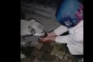 A Stranger Helps a Dog To Quench Its Thirst. Dog`s Reaction Is Far Beyond Your Imagination (VIDEO)