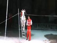 Splendid chinese circus with fantastic stunt