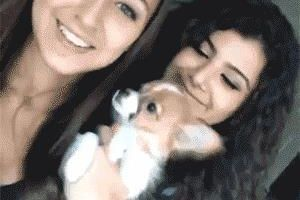 Your sunday funny gif-dump (11 gifs)