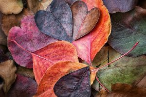 25 Breathtaking Pictures of Fall