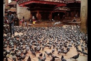 The the pigeons are cute? think again! (17 pics)