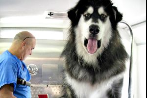 These dogs are so huge that they make you think it's photoshopped