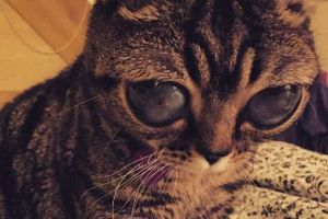 The Cat with the Alien Eyes (6 pics)