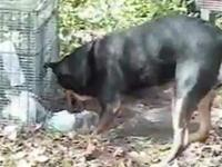 Easter bunny gets trapped, this dog saves the day!
