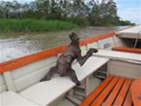 Sloth Hangs Out in Boat