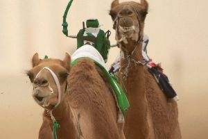 Robots Race through the Use of Camels!