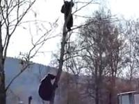 Bear chases man up a tree