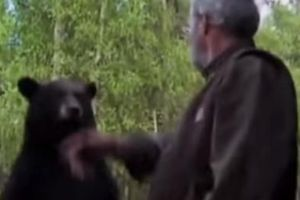 Watch this guy slaps a big bear and continues living. Bear cries