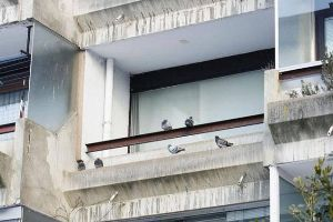 Dude Lets Stray Pigeons Move into His Apartment and the Result Is Beyond Words. OMGG (8 pics)