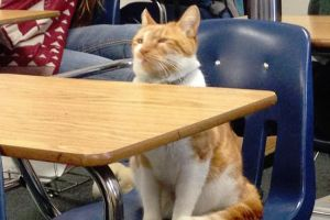 This Cat Visits A High School So Often, They Issued Him His Own `Student` ID Card