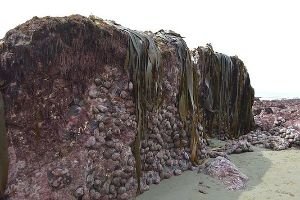 This Is Crazy! New Zealand`s Earthquake Lifted The Sea Floor By Two Metres (4 pics)