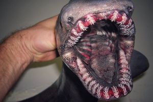 Deep-Sea Catches That Will Haunt Your Dreams Forever