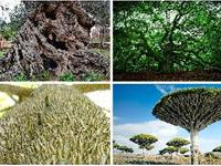 The strangest trees in the world