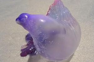 WTF of the day: Strange Sea Creature Washes up on Brazilian Beach