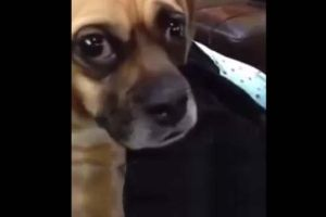 Dog Receives Some Bad News. Didn`t wanna be the one to tell you this, but...