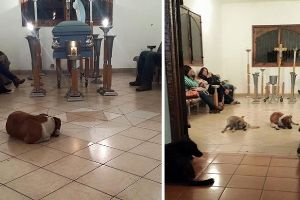 Stray Dogs Attend Funeral Of Woman Who Spent Her Life Feeding Them