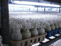 WOWWW.. this is how they grow mushroom in China