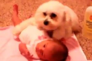 Funny Dogs Protecting Babies - Couldn`t This Be Dangerous Too?