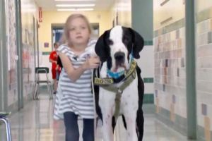 This Little Girl and Her Great Dane Is One of the Most Touching Relationships Ever